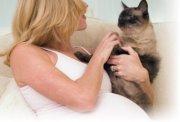 Как определить беременность кошки?