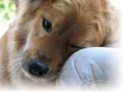 Чем лечить лишай у собаки?