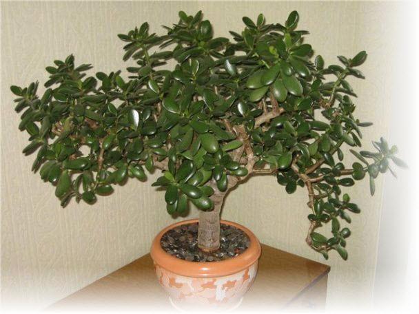 Денежное дерево мы создаем условия