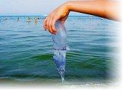 Что делать при ожоге медузы?