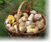 Как чистить грибы?