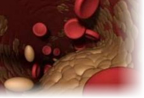 низкий холестерин в крови