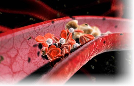 повышенный холестерин в крови причины норма