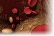 Низкий холестерин в крови причины